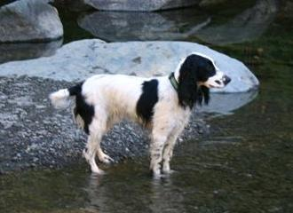 Riley2 aug04