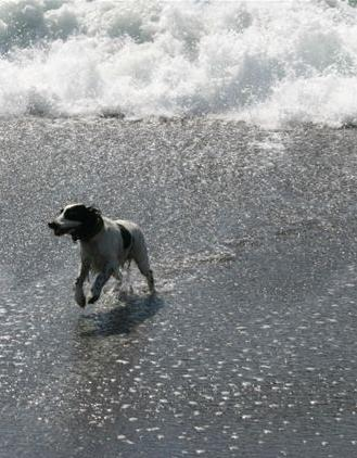 Riley5 aug04