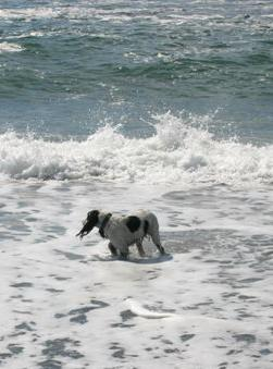 Riley6 aug04